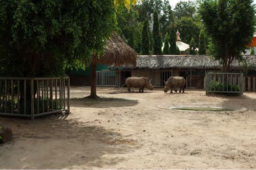 サイゴン動物公園サイのオシッコ