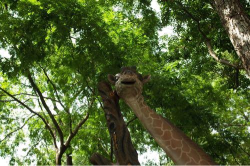 サイゴン動物公園キリン