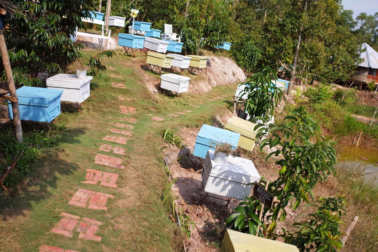 Bee Farm Cafe 養蜂箱