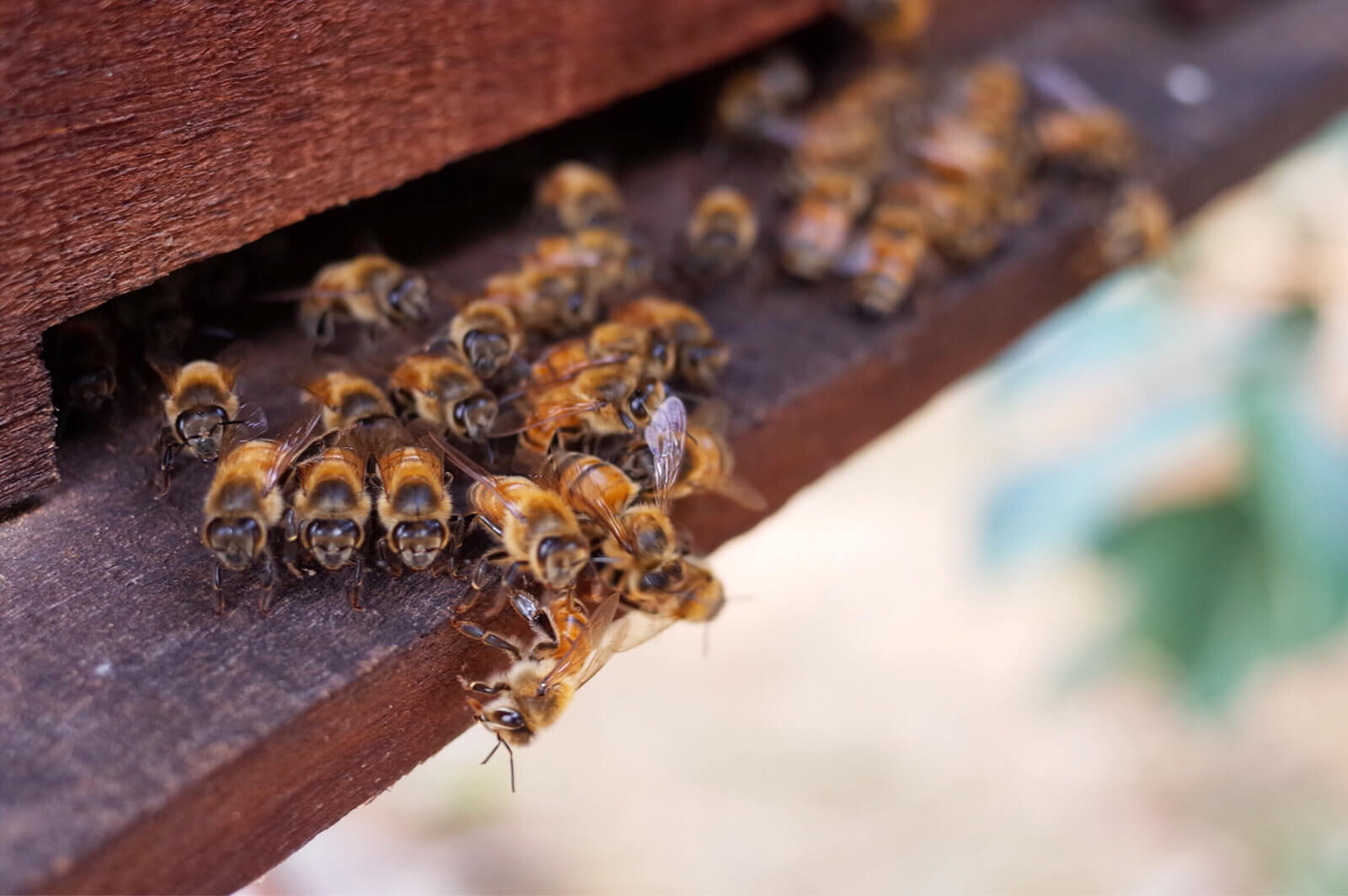 Bee Farm Cafe | フーコック産のハチミツとドリンクをのんびり味わう大人の時間