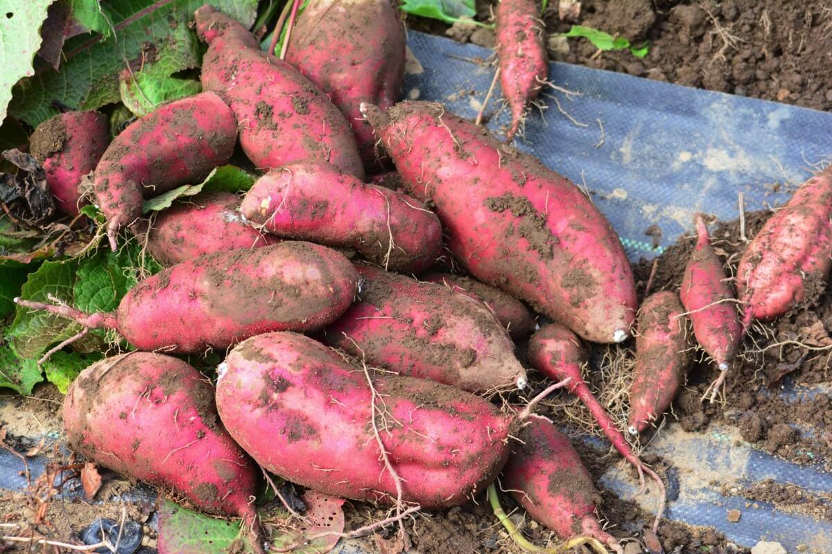 10月が旬の食材 野菜編 〜 季節の変わり目はしっかり栄養をとって!