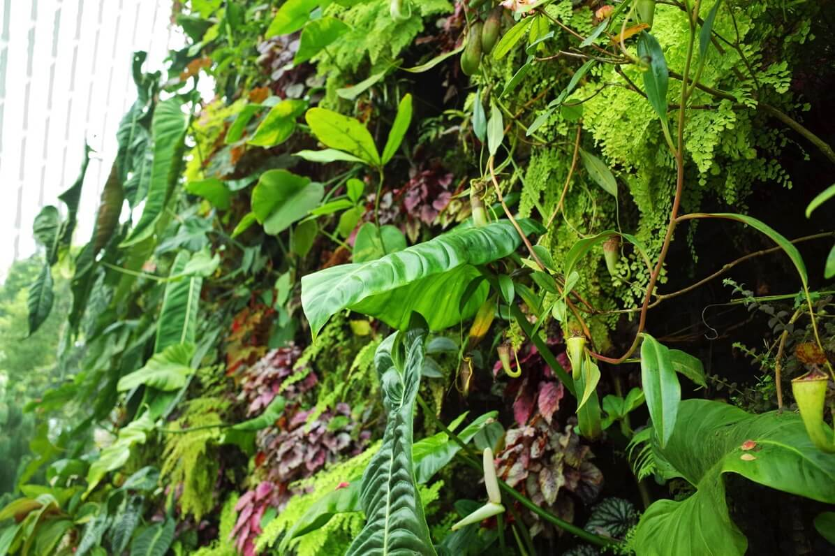 ガーデンズ・バイ・ザ・ベイ クラウドフォレスト 植物