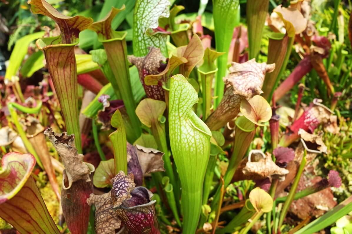 ガーデンズ・バイ・ザ・ベイ クラウドフォレスト 食虫植物