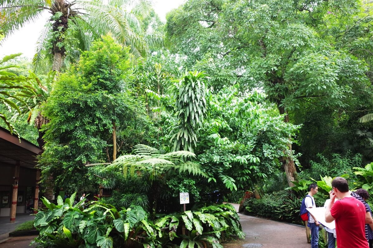 シンガポール動物園 ジャングル