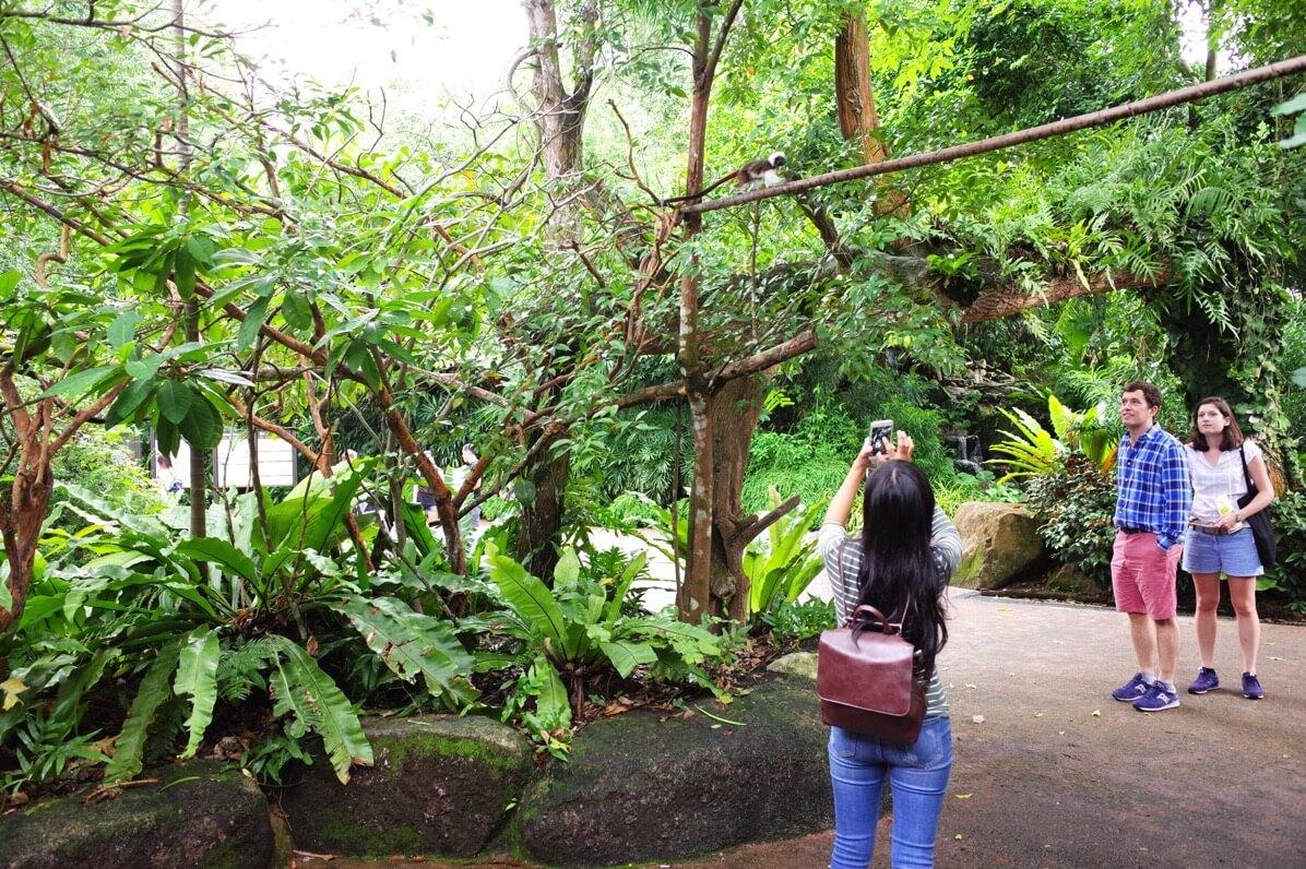 シンガポール動物園  オープンズー