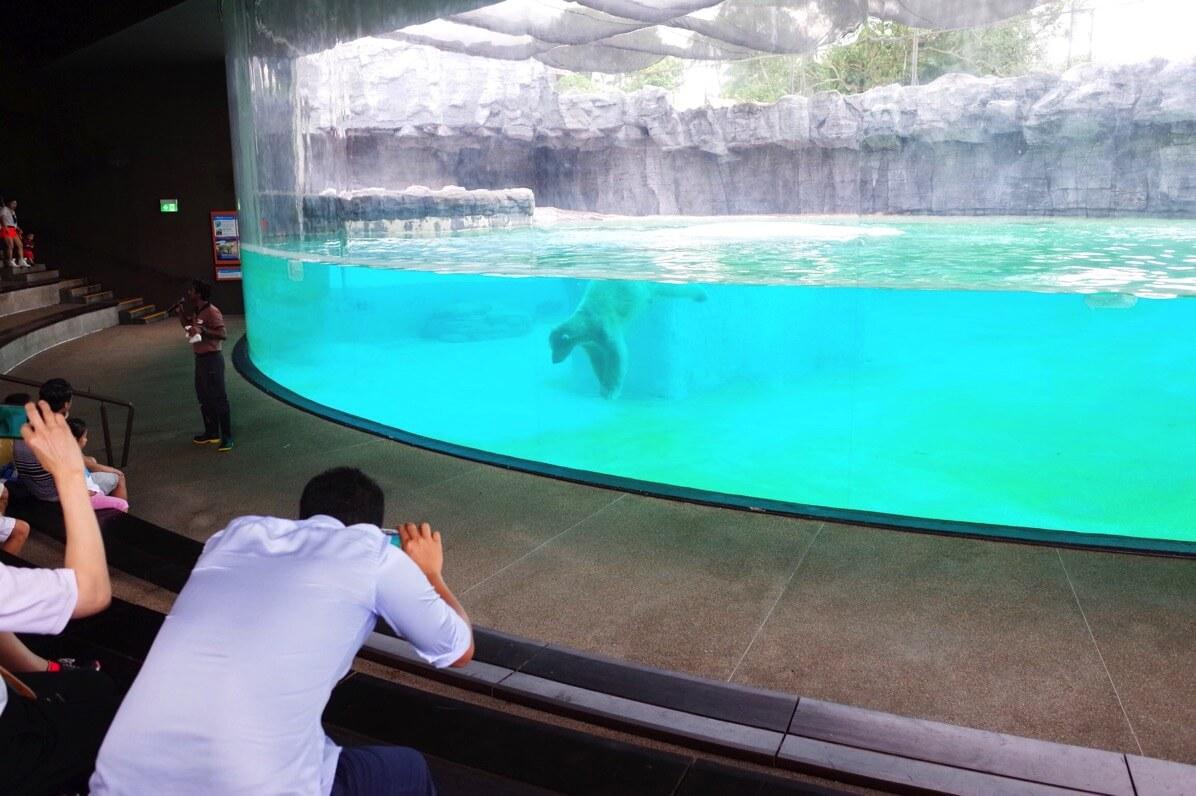 シンガポール動物園 しろくま エサやり