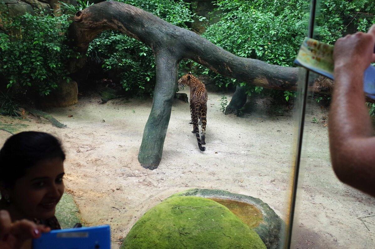 シンガポール動物園 肉食動物