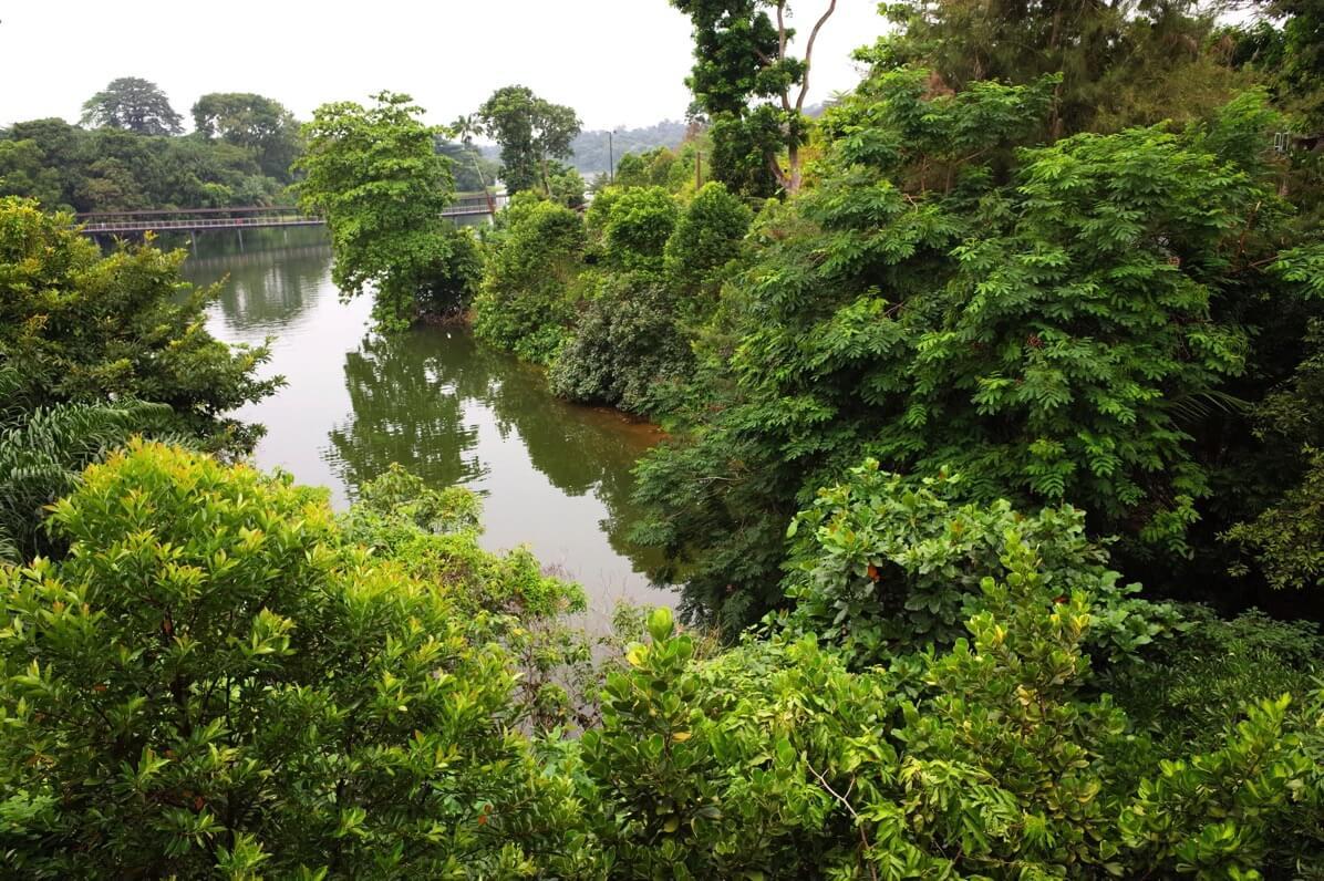 リバーサファリ 熱帯雨林