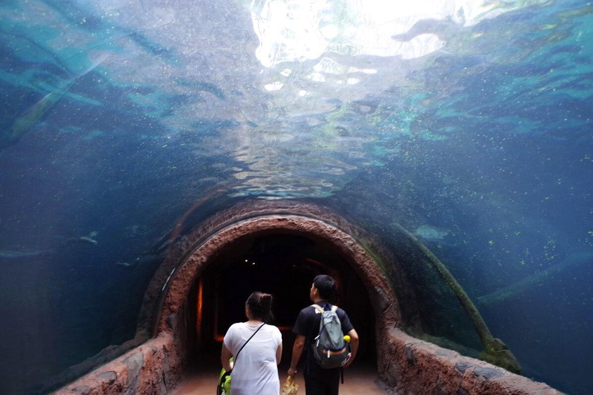 リバーサファリ 水族館
