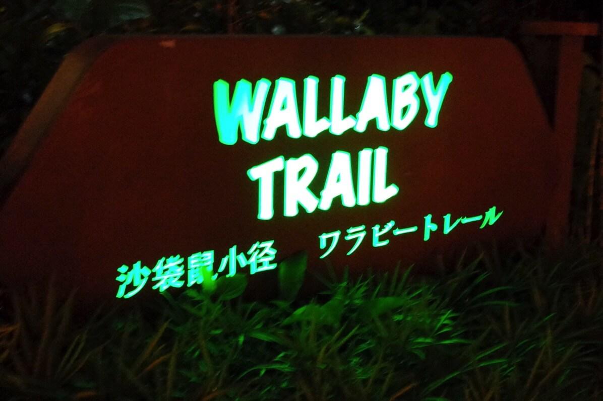 ナイトサファリ 徒歩コース ワラビー