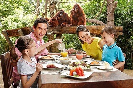 シンガポール動物園 オラウータンと食事