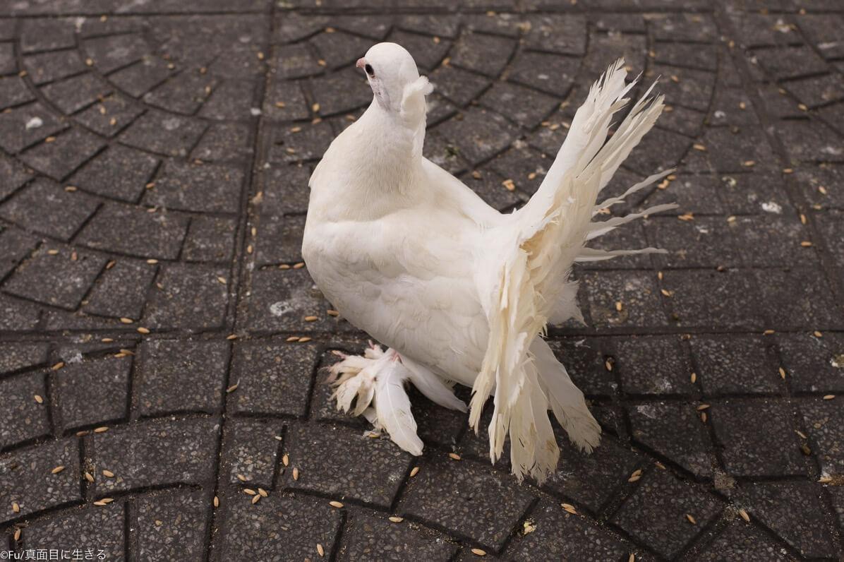 鳩ぽっい鳥