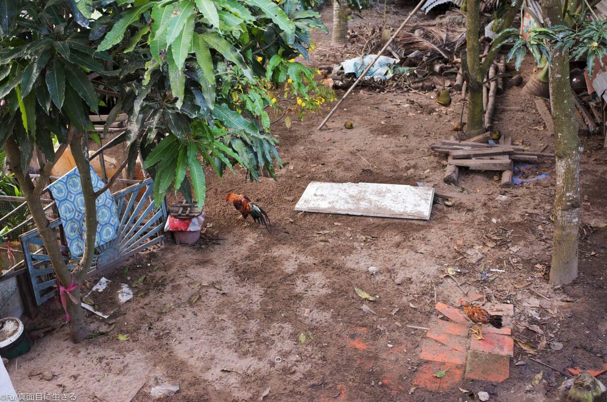 庭には鶏がいる