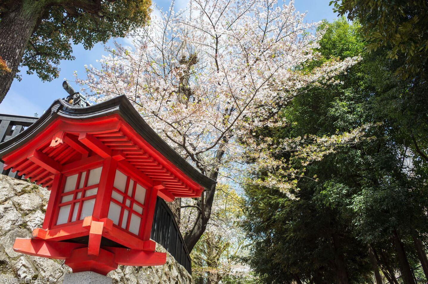 無職でも桜見ると暗い気持ちが吹き飛びますね! ついでに4月下旬以降桜が見られるスポットを調べた1日【Fu/真面目な日常】