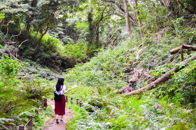 三浦半島 小網代の森をハイキングしてきた【みさきまぐろきっぷ日帰り旅行】