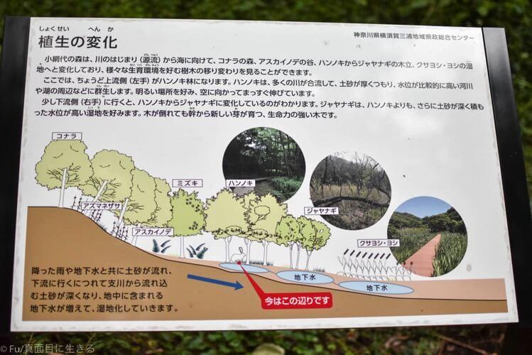 森の中の案内図