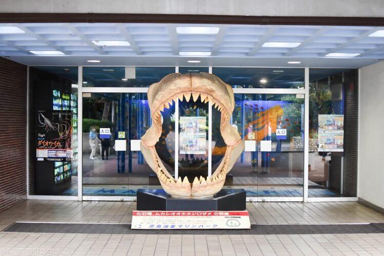 水族館 魚の国