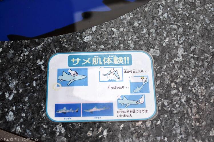 サメに触る時の注意事項