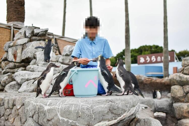 ペンギンの餌やり