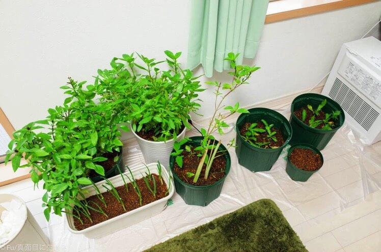 台風に備えて、植物を部屋の中に入れる