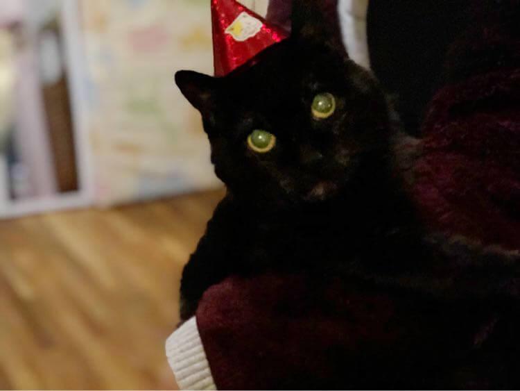 ジョン 黒猫