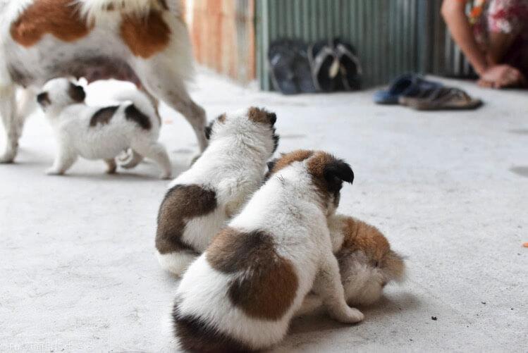戯れる子犬たち