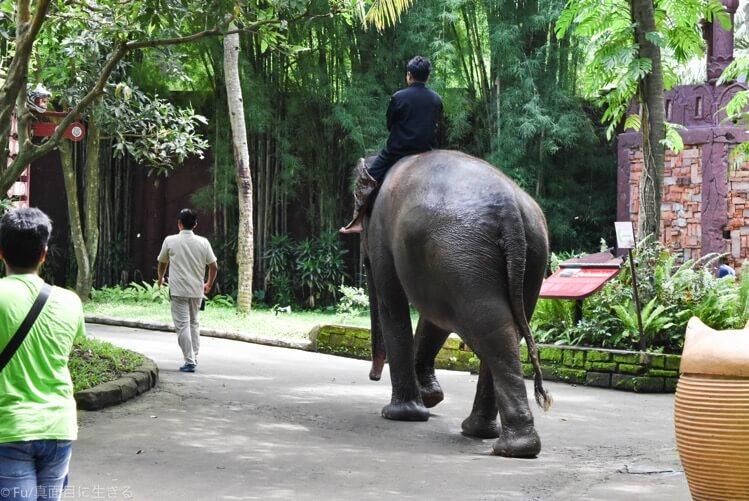 パーク内を歩く象