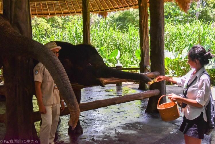 象に餌やり