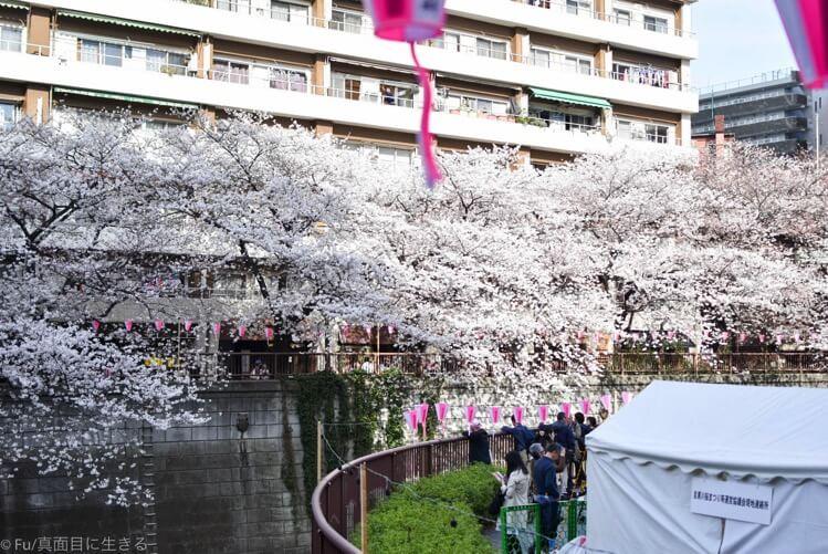 目黒川 桜並木