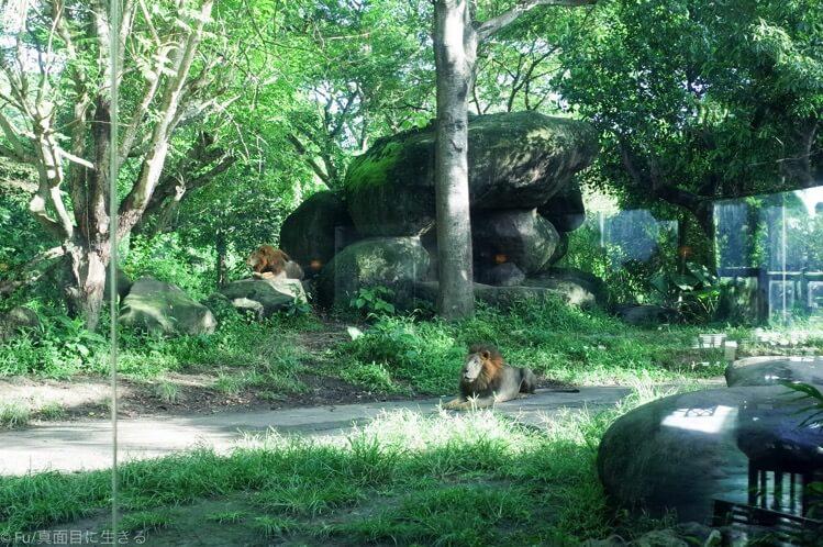 窓の外のライオン
