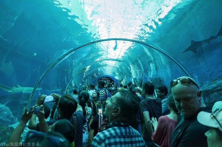 水槽トンネル