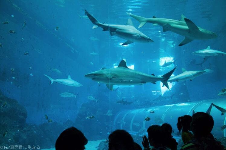 サメが間近で見られ