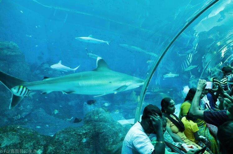 水槽トンネルにもサメ