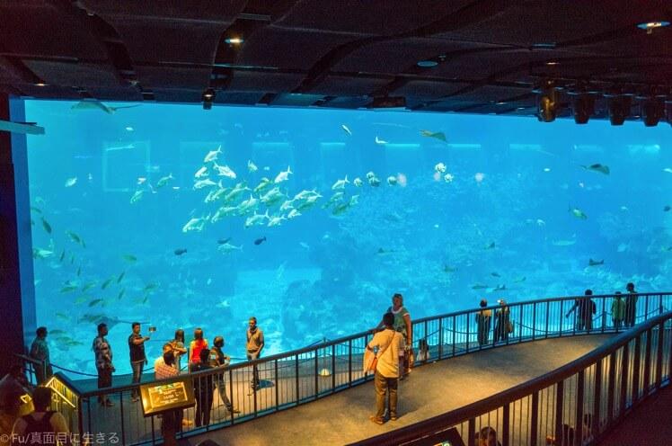 シンガポール シーアクアリウム水族館【徹底ガイド】割引チケット・行き方・営業時間