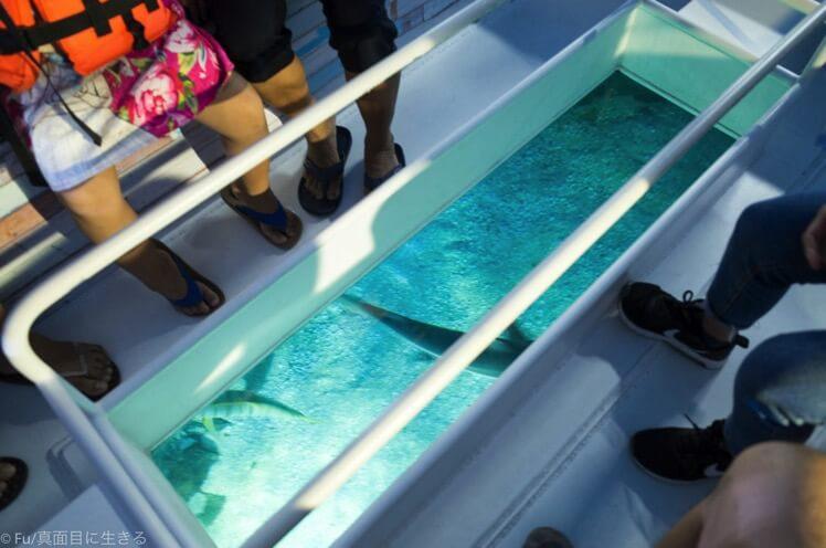 ボートの底がガラス