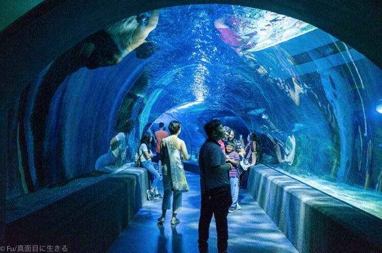【割引】バンコクの水族館「シーライフ」【徹底ガイド】クーポンチケット・予約方法・行き方など