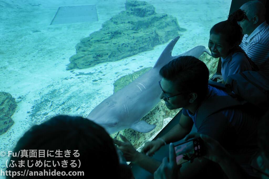 イルカが接近