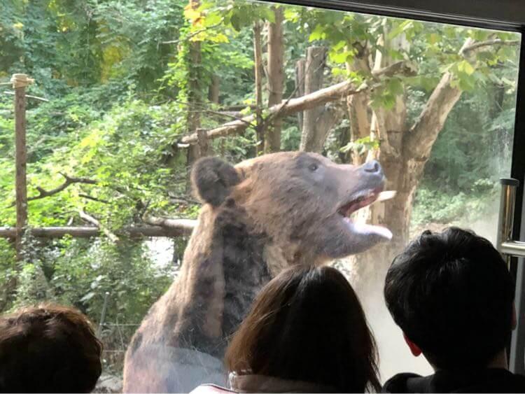 クマに接近