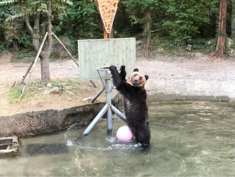ダンクしてドヤ顔のクマ
