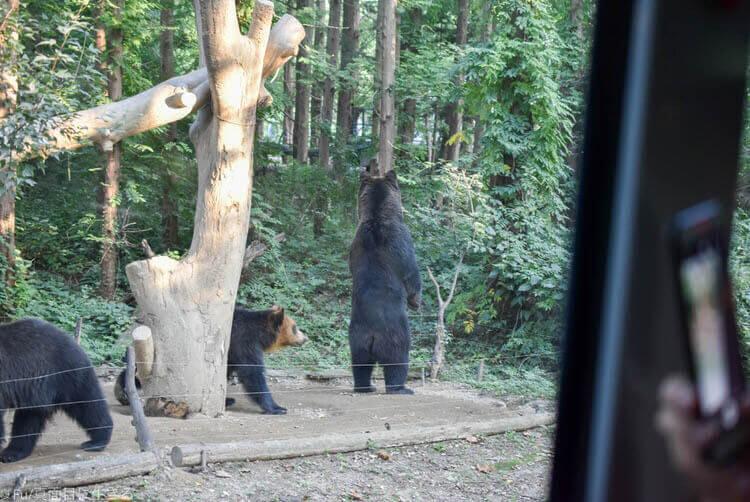 ソウルエバーランド 熊の立ち姿
