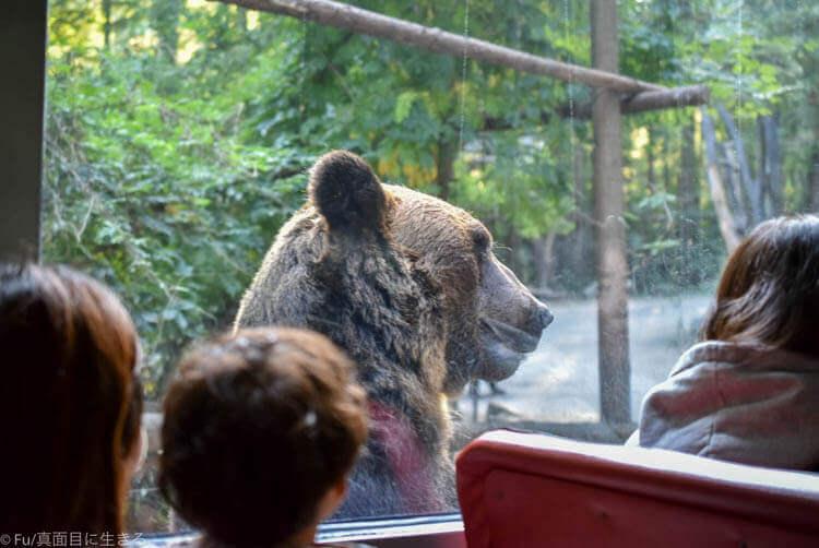 ソウルエバーランド クマが接近