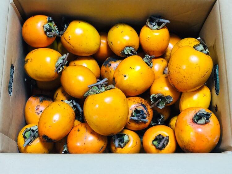 大量の渋柿