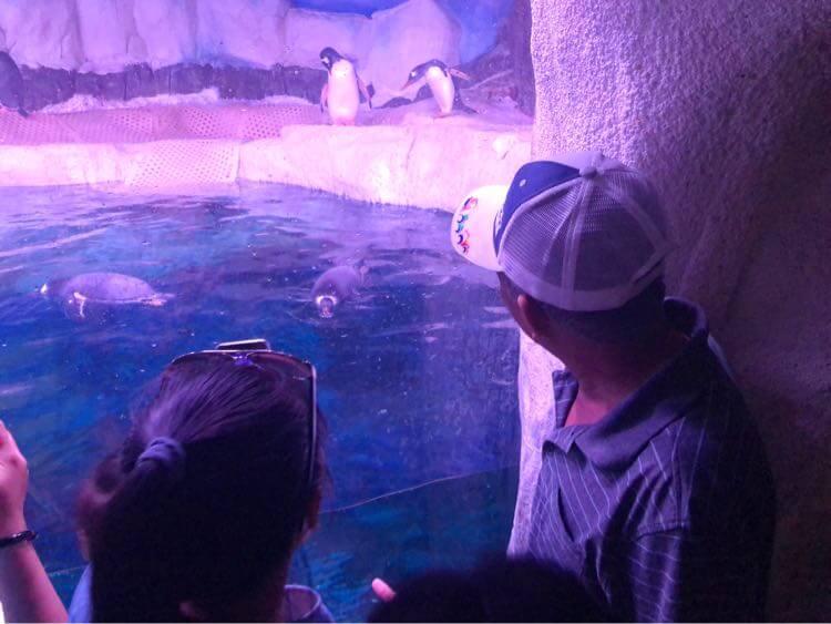 ペンギンとお義父さん