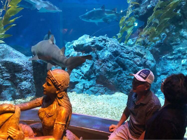 サメとお義父さん