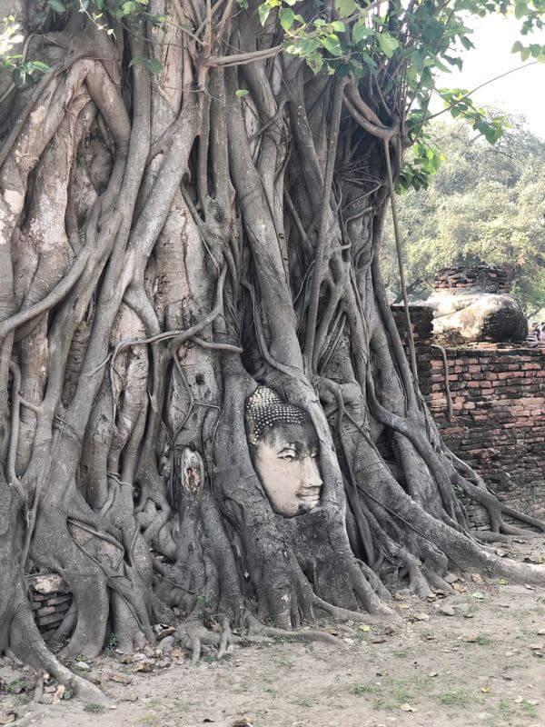 ワット・プラ・マハータートの仏像の頭と木の根っこ