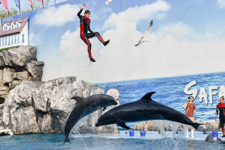 サファリワールド 人間とジャンプするイルカ