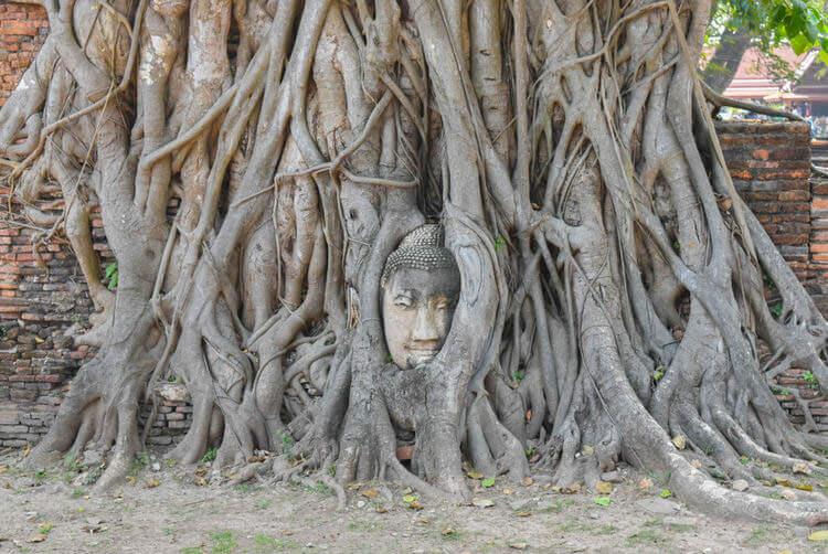 ワット・プラ・マハータート 木の根っこに仏像