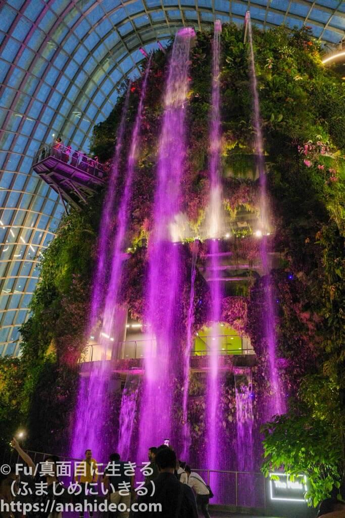 夜のクラウドフォレスト 紫色に発光する滝
