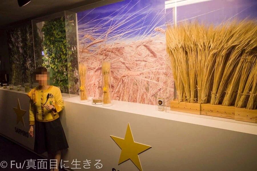 サッポロビール 北海道工場 見学ツアー 麦の解説