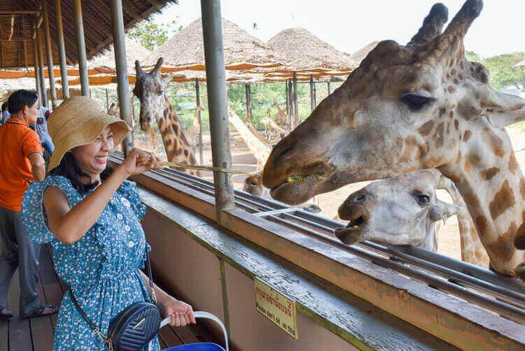 バンコク サファリワールド キリンの餌やり